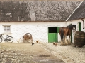 muckross-farms